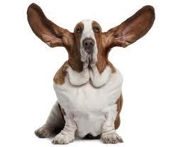Bassett Ears